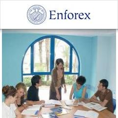 Enforex, Alicante