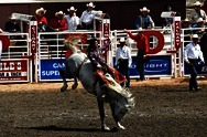 Calgary Stampede (Rodeo)