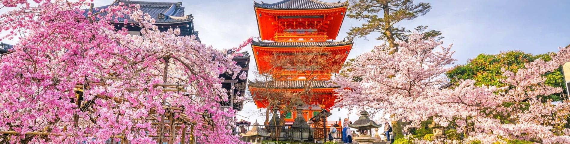 2 Best Language Schools In Kyoto