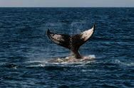 Two Oceans Hermanus Whale Festival