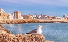 Top Destinations: Cadiz (city thumbnail)