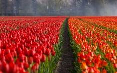 Principais destinos: Holanda (city thumbnail)
